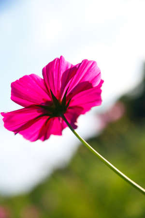 natural fresh flower in natur with nice background