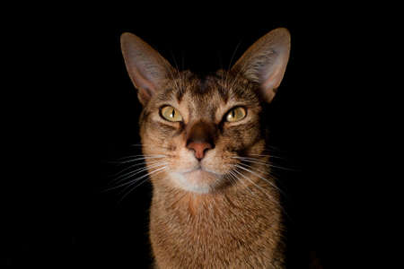 Photo of a race cat