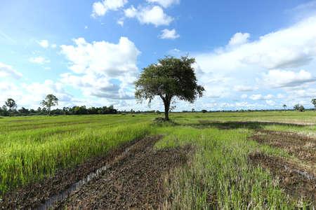 field and sky: Campo y cielo �rboles Foto de archivo