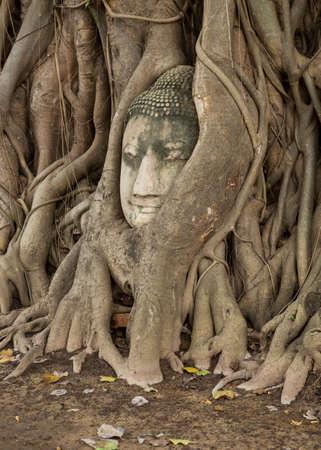budda: budda head traped in the tree roots - Ayutthaya - Thailand Stock Photo
