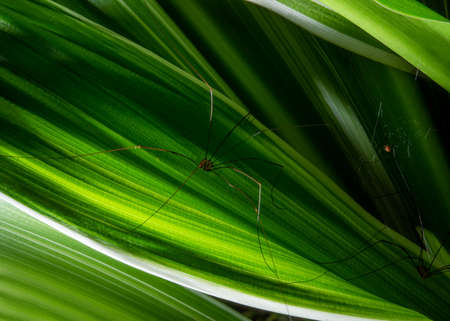 Close up:spider on net in sunshine.