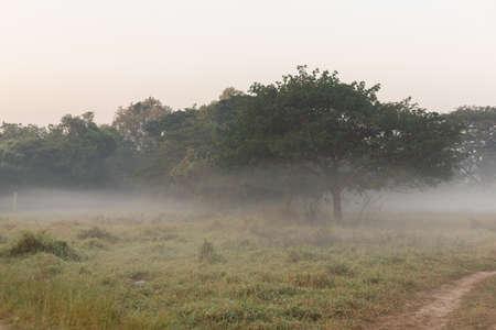 Path through a misty forest. Archivio Fotografico