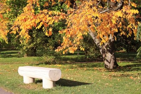 Bench in the park under a tree with yellow leaves photo