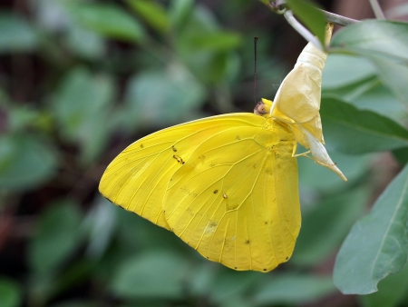 Yellow butterfly pop out 写真素材