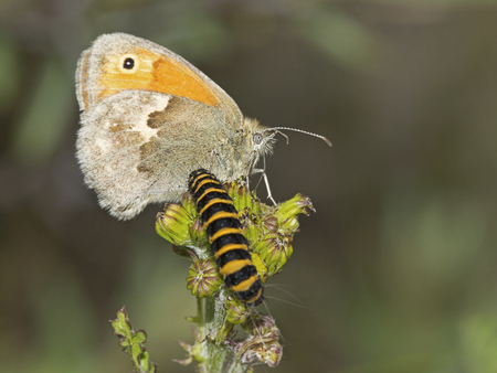transmutation: Butterfly and caterpillar on plant Stock Photo