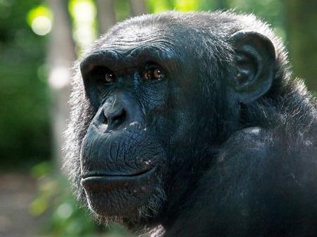 chimp: Chimp