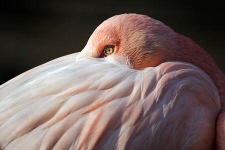 florida flamingo: Flamingo Stock Photo