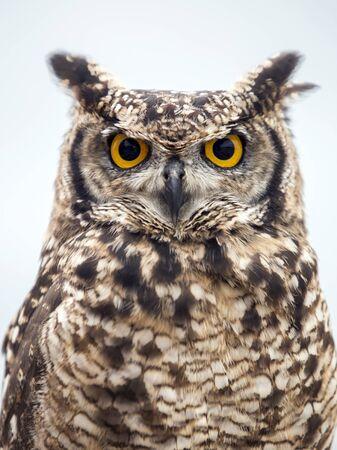Owl Stockfoto