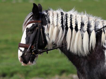 windows and doors: Gypsy horse