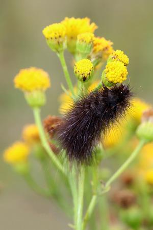 Caterpillar close up Stockfoto