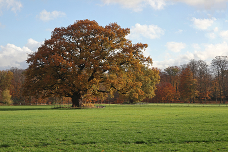 Autumn in the country seat of