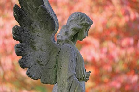 Estatua de ángel y árboles en flor en el cementerio municipal de Ámsterdam, Países Bajos.