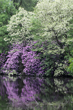 Scenic view of blooming bushes beside lake