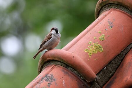 cute little sparrow view outdoor