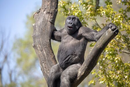 gorilla on tree in nature view