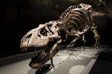 old dinosaur skeleton in museum
