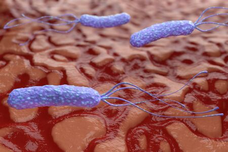 Illustration of Helicobacter pylori bacteria on the background of a human stomach. Medical concept. 3 d render. Stockfoto