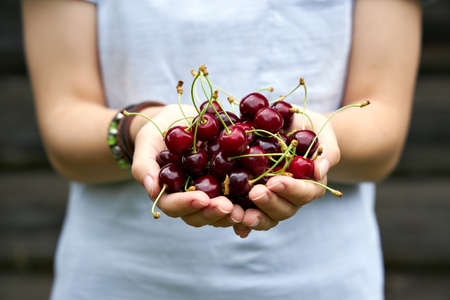 The girl holds ripe cherries in her palms. Close up shoot.