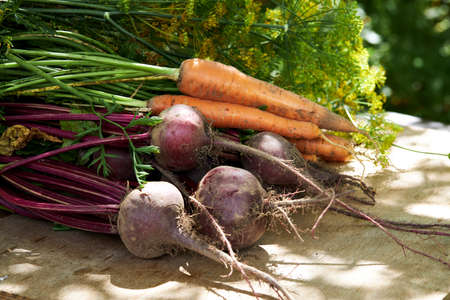Fresh harvest of organic vegetables on a wooden table on a sunny day. Organic fresh harvested vegetables.