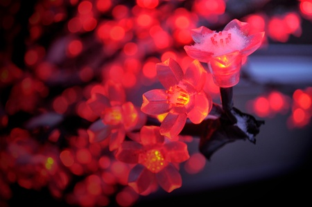 blumen: Red Flower Lights Stock Photo