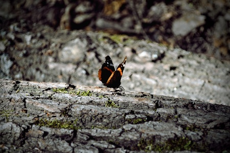 harsh: butterfly on a harsh forest ground in frontview darker