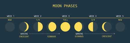 sol y luna: Ilustración del vector de la carta informativa del Ciclo de la Luna Mensual
