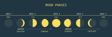 phases: Vector Illustration of Informative Chart of Monthly Moon Cycle Illustration