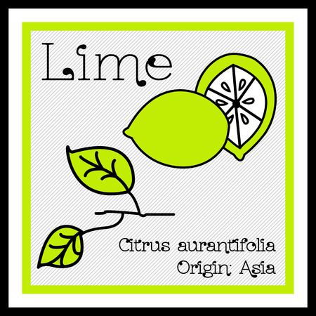black branch: Vector Illustration of Descriptive Flat Lime Icon Illustration