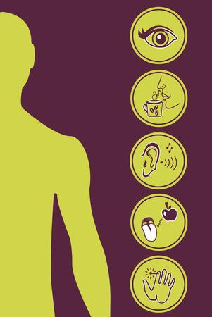 escuchar: Icon Set de Cinco Sentidos Humanos Diagrama