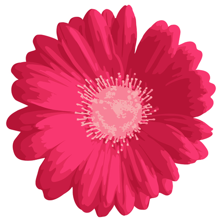 Pink gerbera or daisy flower, isolated on white background. Floral ornament design. Hand drawn vector illustration.