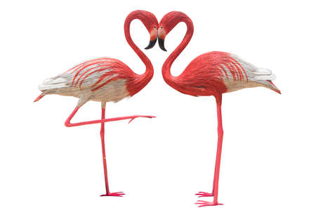 two flamingo isolated