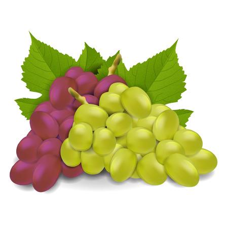 ブドウのベクトル  イラスト・ベクター素材