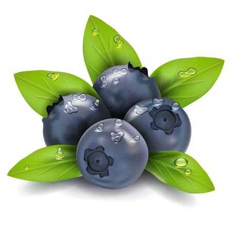 blueberries: Bilberry vector