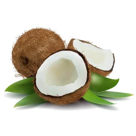 Coconut Ilustración Ilustración de vector