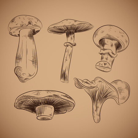 Mushroom hand drawn vector line illustration on brown background. 矢量图像