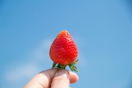 イチゴ 写真素材