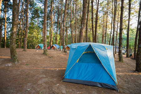 roughing: Camping and tent under the pine forest  Stock Photo