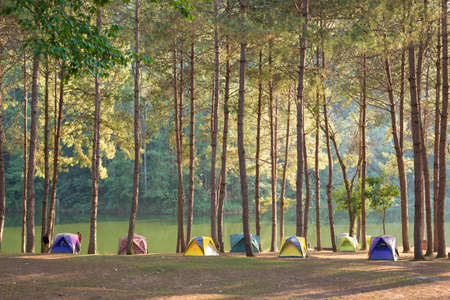 Camping and tent under the pine forest  photo