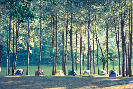camping tent: Camping and tent under the pine forest Vintage color style