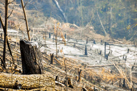 alarming: Trace Of Tropical Forest Fire Alarming And Dangerous. Stock Photo