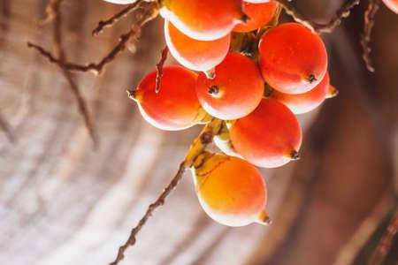здоровье с со спелыми зрелыми