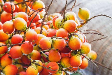 chewed: Catechu Areca Nut Mature Ripe On Tree. Stock Photo