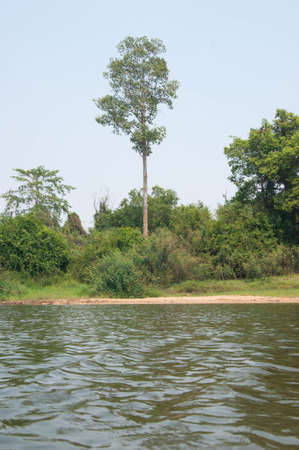 riverside tree: tree big near of riverside saybye view nature images