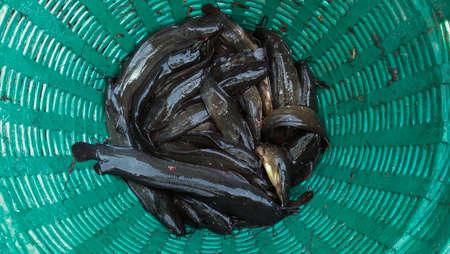 catfish asian images in basket of thai market esan thailand