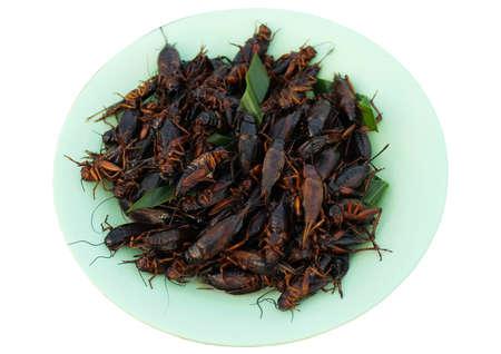 食品メニュー insectsv 揚げた本クリケット皿 isoleted 白い背景の上に揚げ 写真素材