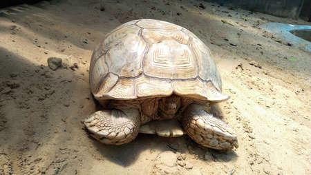 land turtle: giant tortoise on ground baground images