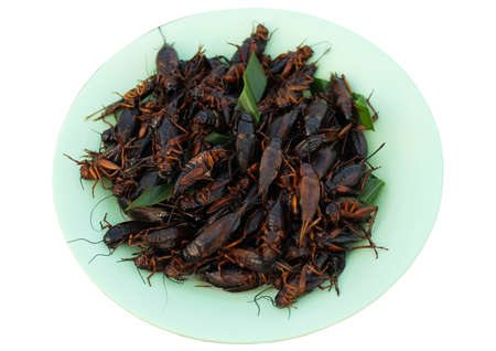 food menu insectsv fried present cricket fried on dish isoleted on white background