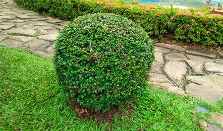 shrubs of lawn in the garden . shrubs image Stock Photo