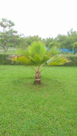 Small palm trees in garden