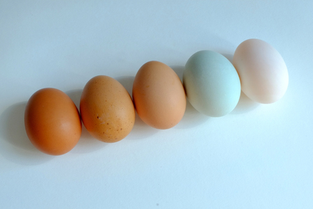 Chicken egg and duck egg line up on white background, Compare shell tone of egg